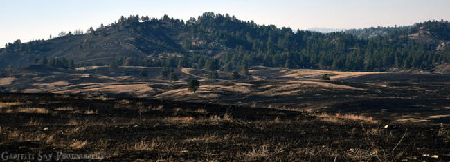 Rankin Ridge Prescribed Burn - Wind Cave National Park