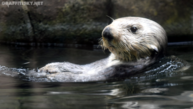seaotter1